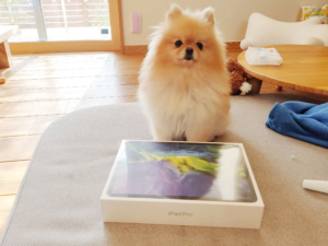 新iPadAirとiPad Pro どっちがいい?悩みに悩んでiPad Pro 11inch 256GBを購入!比較ポイントをまとめま...